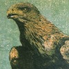 Dimitri Feenstra: Golden eagle, houtsnede, 30 x 40 cm.