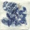 Ellen Geerts: Herbarium 1, inkt op papier, 10 x 10 cm (lijst 15 x 15 cm). 145 euro