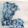 Ellen Geerts: Herbarium 3, inkt op papier, 10 x 10 cm (lijst 15 x 15 cm). 145 euro