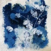 The Meadow 2, cyanotype/inkt op papier, 10 x 10 cm (lijst 22 x 22 cm). 145 euro
