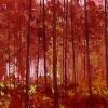 G-bos fire (2008) olieverf op doek, 100 x 140 cm