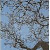 2020-I, houtdruk, 65 x 55 cm