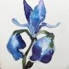 Iris, gemengde techniek op papier, 15 x 15 cm