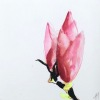 Magnolia 2, gemengde techniek op papier, 15 x 15 cm