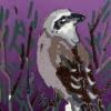 Grauwe klauwier (2020) linodruk (oplage 8) 20 x 15 cm