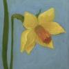 Narcisje (2021) olieverf op paneel, 12 x 10 cm