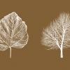 Fall (2018) Fotoprint 3/10, 14 x 18,5 cm